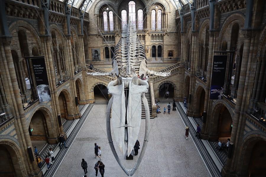 national art pass Natural History Museum